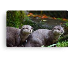Otter Couple Canvas Print