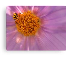 Spider lying in wait Canvas Print