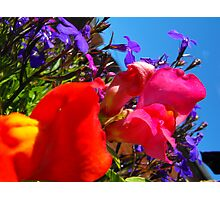 add some colour Photographic Print