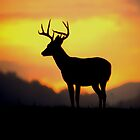 Sunrise Buck by Miles Moody