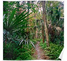 Fern Path. Highlands Hammock. Poster