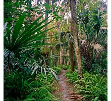 Fern Path. Highlands Hammock. Photographic Print