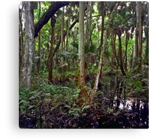 Swamp. Highlands Hammock. Canvas Print