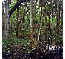 Swamp. Highlands Hammock. Photographic Print
