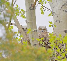 Who is Watching You ?  by Judy Grant