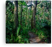Path Through The Oaks. Highlands Hammock. Canvas Print