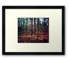 Pine Forest #1. Split Oak. Framed Print