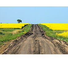A Muddy Farm Road and A Lone Tree Photographic Print