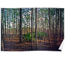 Pine Forest #2. Split Oak. Poster