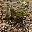 Frog January by Thomas Murphy