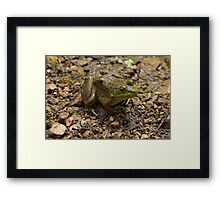 Frog January Framed Print