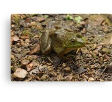 Frog January Canvas Print