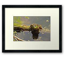 Frog February Framed Print