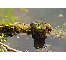 Frog February Photographic Print