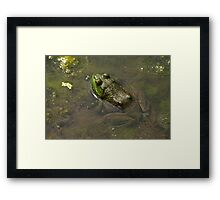 Frog April Framed Print