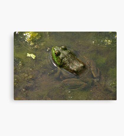 Frog April Canvas Print