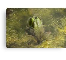Frog May Metal Print