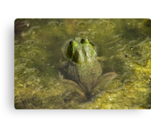 Frog May Canvas Print