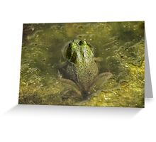 Frog May Greeting Card