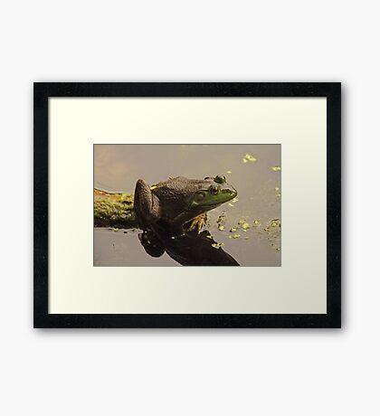 Frog June Framed Print