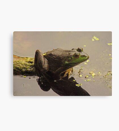 Frog June Canvas Print
