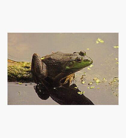 Frog June Photographic Print