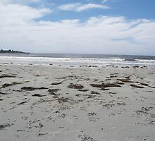 Dog on beach by phaedra1973