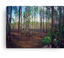 Pine Forest #3. Split Oak. Canvas Print