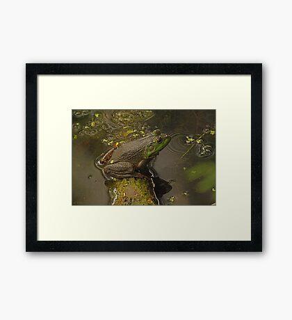 Frog September Framed Print