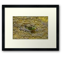 Frog October Framed Print