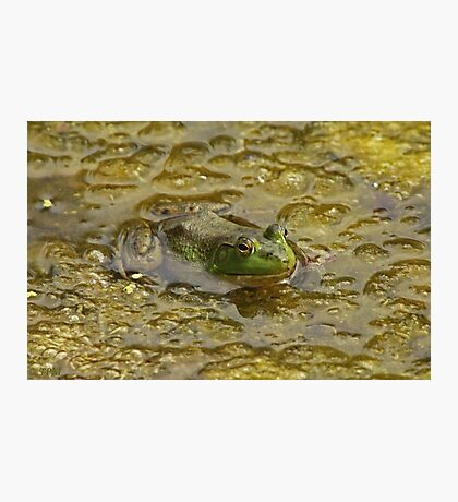 Frog October Photographic Print