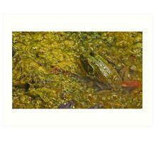 Frog November Art Print