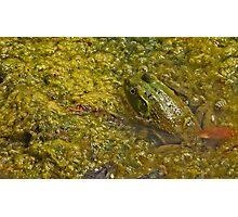 Frog November Photographic Print