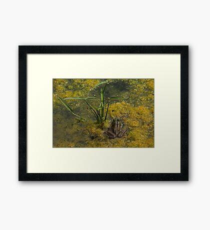 Frog December Framed Print