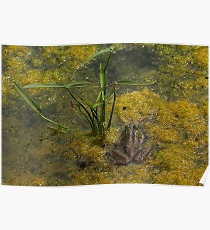Frog December Poster