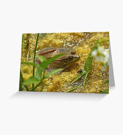 Frog August Greeting Card