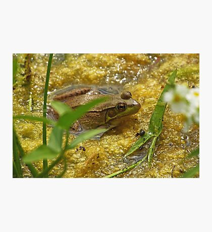 Frog August Photographic Print