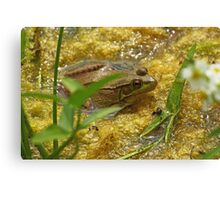 Frog August II Canvas Print