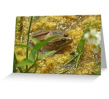 Frog August II Greeting Card