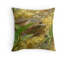 Frog August II Throw Pillow