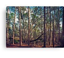 The Split Oak. Canvas Print