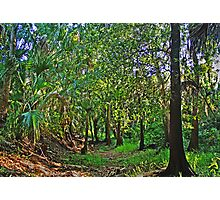 cartoon forest Photographic Print