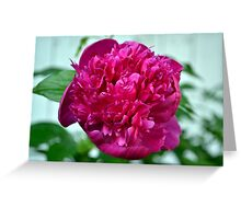 Just a Peony in the Yard Greeting Card