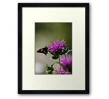 Silver-Spotted Skipper on Bee Balm Framed Print