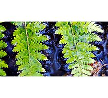 Ferns in The River Photographic Print