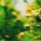 When Flowers Dream by lupideloop