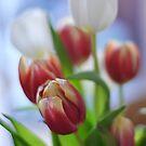 Tulips by Karen  Betts
