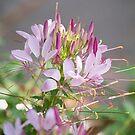 Floral Splendour by KBritt