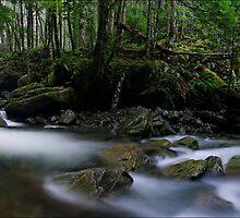 Meander Forest pan by Robert Mullner