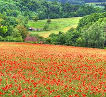 Poppy Fields Oxfordshire by Colin  Williams Photography